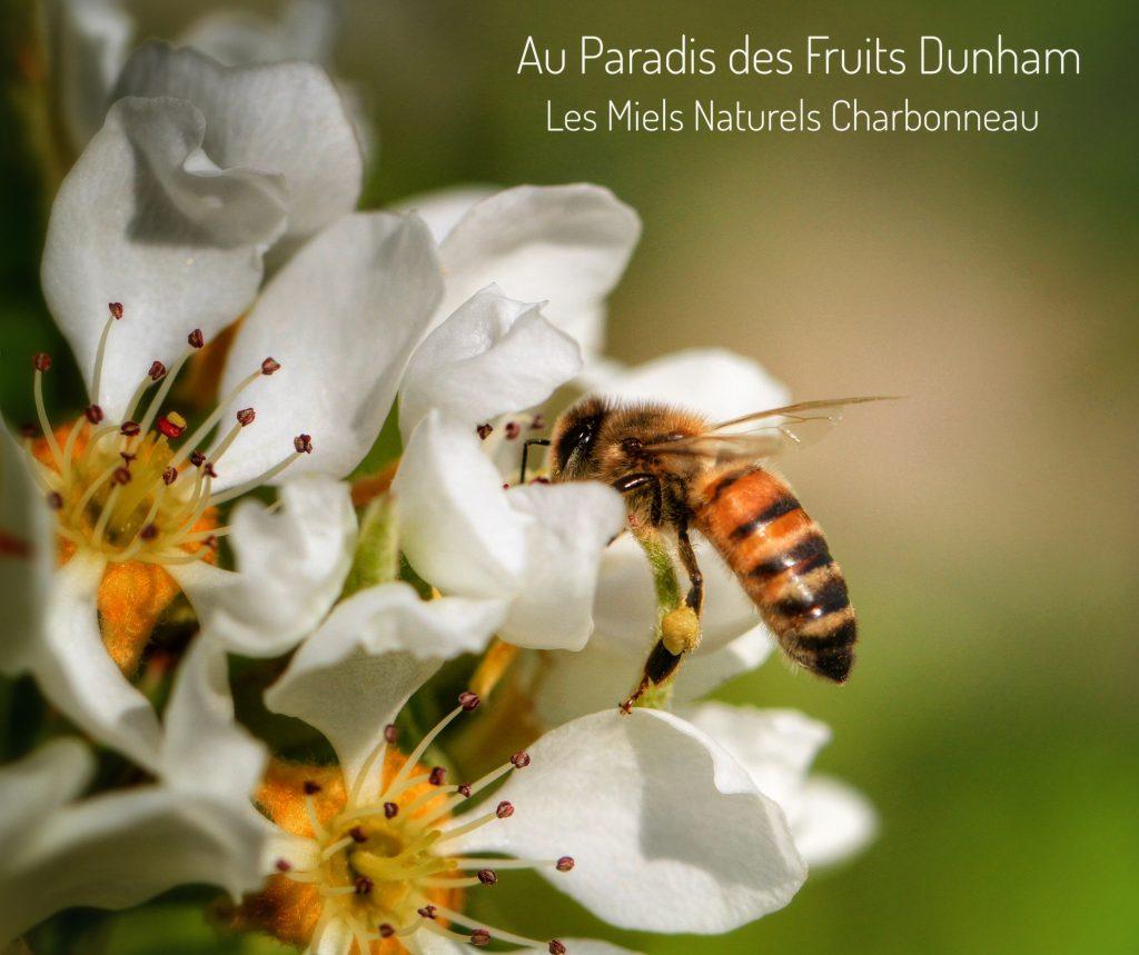 Paradis des Fruits Dunham, eco-friendly, orchard, pick your own, u-pick, Strawberry, raspberry, blueberry, currant, gooseberry, sour cherry, blackberry, apple, pear, plum, honey, Honeycrisp