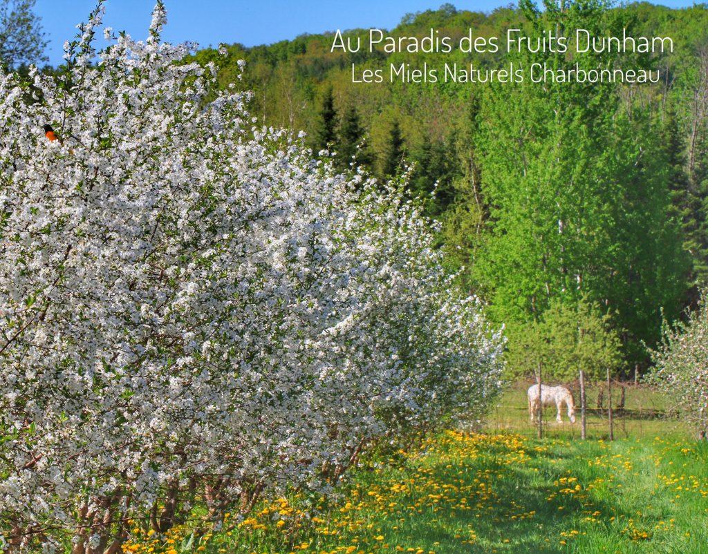 Au Paradis des Fruits Dunham, autocueillette, ecologique, Fraise, framboise, bleuet, cassis, groseille, gadelle, cerise griotte, mure, pomme, poire, prune, miel